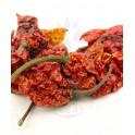 Bhut Jolokia sušené papričky